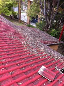 Gutter Cleaning Service Brisbane